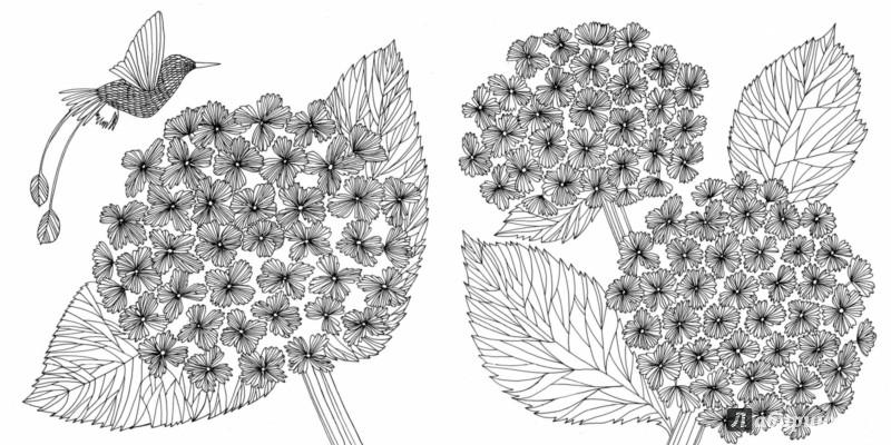 Иллюстрация 8 из 50 для Птицы счастья. Раскрась свой мир и добавь жизни цвета   Лабиринт - книги. Источник: Лабиринт