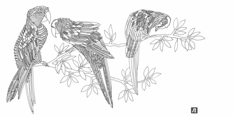 Иллюстрация 9 из 50 для Птицы счастья. Раскрась свой мир и добавь жизни цвета | Лабиринт - книги. Источник: Лабиринт