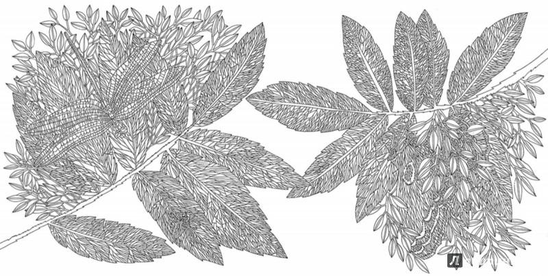 Иллюстрация 4 из 27 для Раскраска. Прятки-загадки ...