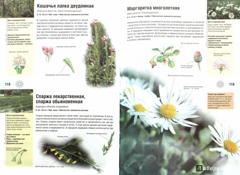 Иллюстрация 1 из 6 для Иллюстрированный травник. 350 видов лекарственных растений - Вольфганг Гензель   Лабиринт - книги. Источник: Лабиринт