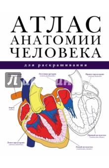 Атлас анатомии человека для раскрашивания шилкин в филимонов в анатомия по пирогову атлас анатомии человека том 1 верхняя конечность нижняя конечность cd