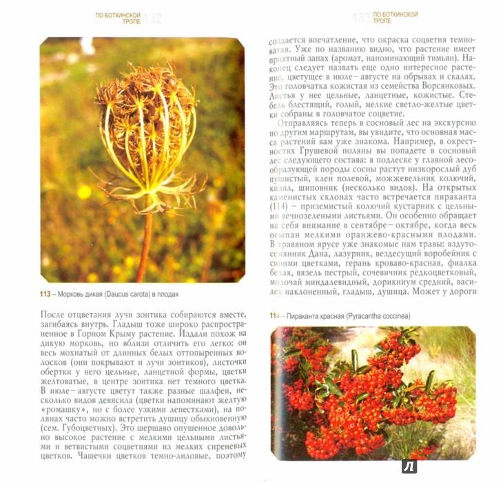 Иллюстрация 1 из 16 для Ботанические экскурсии по Горному Крыму - Крюкова, Исиков | Лабиринт - книги. Источник: Лабиринт