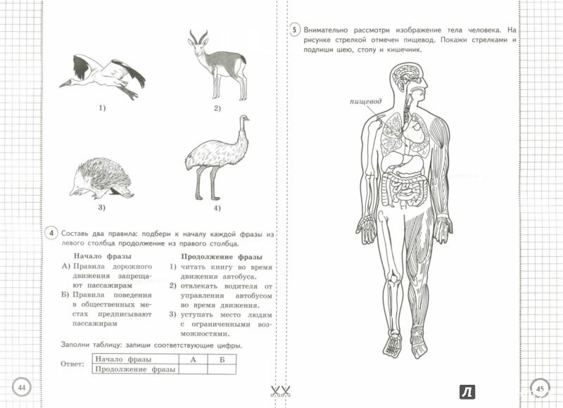 Иллюстрация 1 из 11 для ВПР. Окружающий мир. 4 класс. Типовые задания. 25 вариантов. ФГОС - Волкова, Цитович | Лабиринт - книги. Источник: Лабиринт