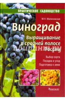 Виноград.Выращивание в средней полосе России