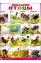 Плакат Домашние птицы (555х774)
