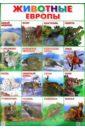 Плакат Животные Европы (550х770)