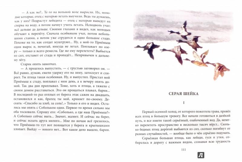 Иллюстрация 1 из 8 для Рассказы и сказки - Дмитрий Мамин-Сибиряк | Лабиринт - книги. Источник: Лабиринт