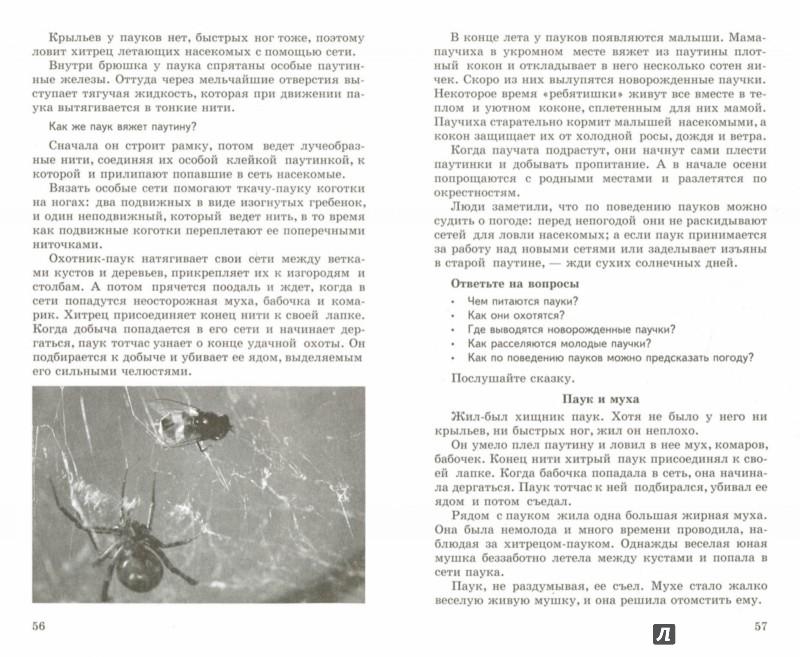Иллюстрация 1 из 6 для Беседы о насекомых с детьми 5-8 лет - Татьяна Шорыгина | Лабиринт - книги. Источник: Лабиринт
