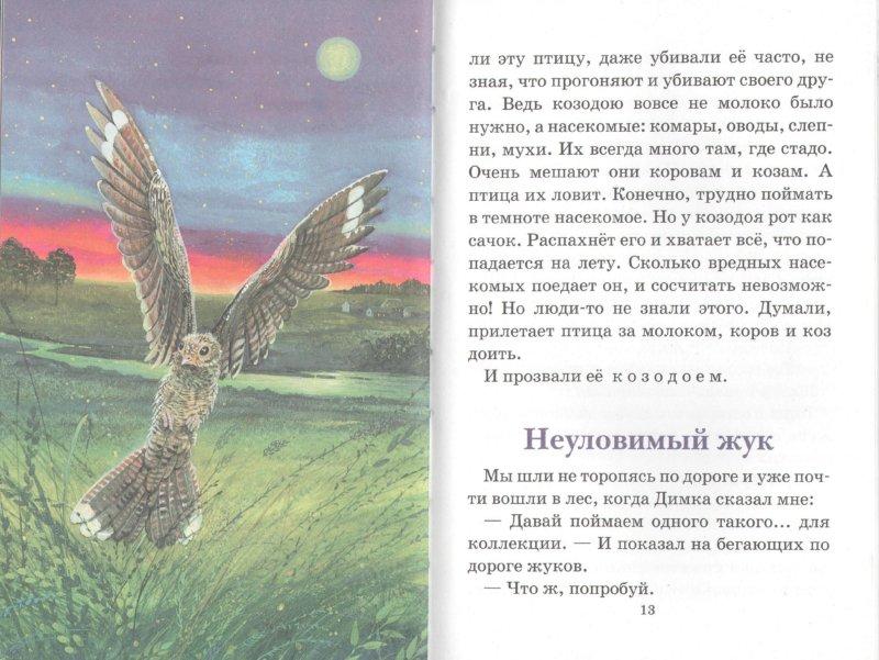 Иллюстрация 1 из 16 для Лесные загадки - Юрий Дмитриев | Лабиринт - книги. Источник: Лабиринт