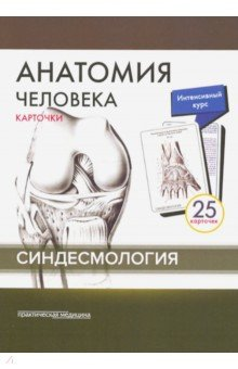 Анатомия человека. Синдесмология (25 карточек)