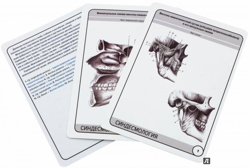 Иллюстрация 1 из 4 для Анатомия человека. Синдесмология (25 карточек) - Сапин, Николенко, Тимофеева | Лабиринт - книги. Источник: Лабиринт