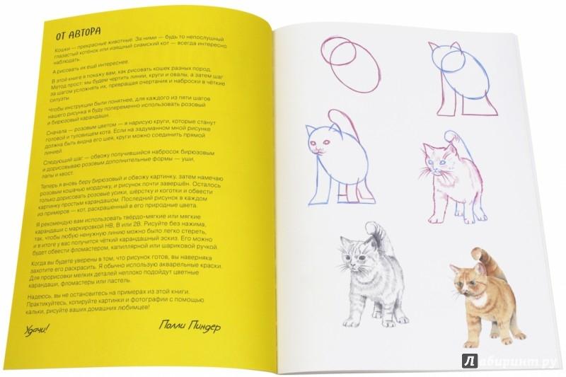 Иллюстрация 1 из 15 для Как нарисовать кошек? Просто! - Полли Пиндер | Лабиринт - книги. Источник: Лабиринт