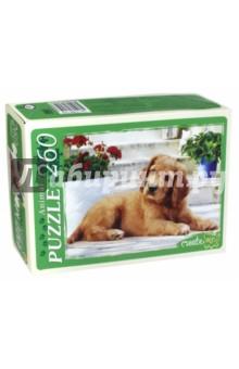 Puzzle-260