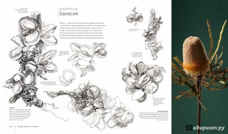 Иллюстрация 1 из 44 для Ботаника для художника. Полное руководство по рисованию растений - Сара Симблет | Лабиринт - книги. Источник: Лабиринт