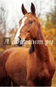 Блокнот Удивленная лошадь (нелинованный, 32 листа, А5) блокнот в пластиковой обложке ван гог цветущие ветки миндаля формат малый 64 страницы арте