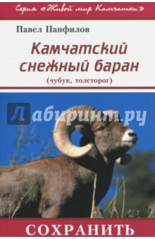Камчатский снежный баран (чубук, толсторог)
