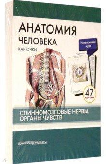 Анатомия человека. Карточки. Спинномозговые нервы и органы чувств (47 карточек)