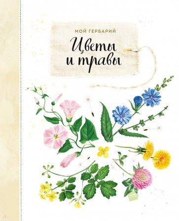 Мой гербарий. Цветы и травы, Васильева Алла