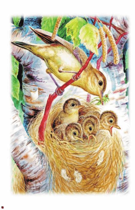 Иллюстрация 1 из 16 для Сказки и рассказы - Виталий Бианки | Лабиринт - книги. Источник: Лабиринт