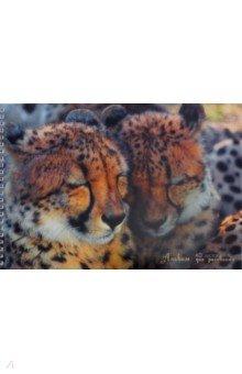 Альбом для рисования Два гепарда (40 листов, А4) (АС2Л401805)
