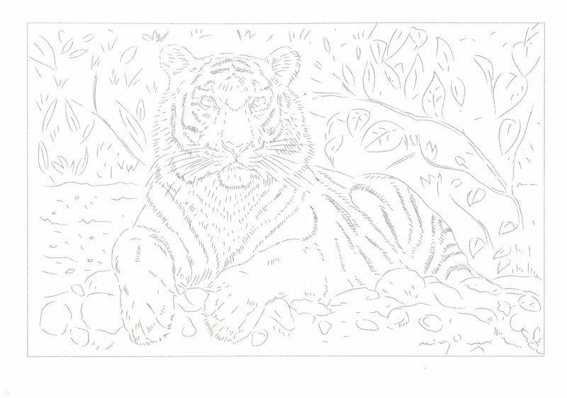 акварельные раскраски по эскизам животные 8 листов а4 47516
