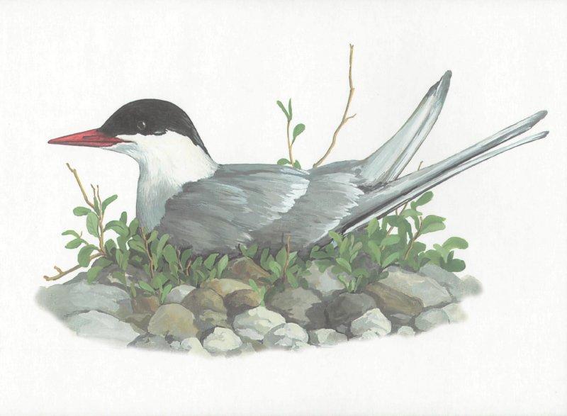 Иллюстрация 1 из 6 для Животные Севера | Лабиринт - книги. Источник: Лабиринт