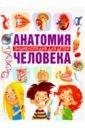 Гуиди Винченцо Анатомия человека. Энциклопедия для детей
