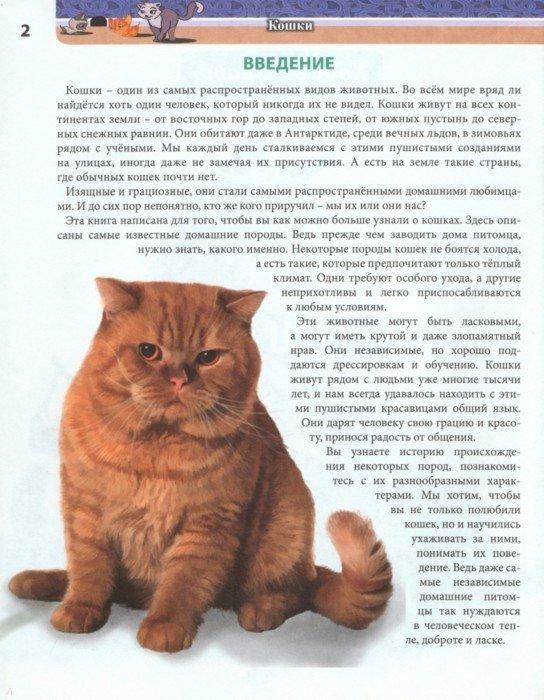 Иллюстрация 1 из 17 для Хочу все знать. Кошки - Леся Калугина | Лабиринт - книги. Источник: Лабиринт