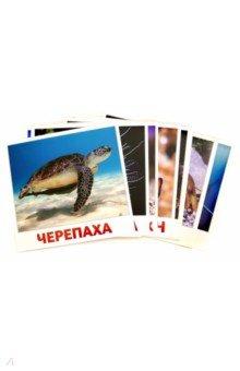 Купить Набор карточек Водные жители (20 карточек), АгаБум, Обучающие игры