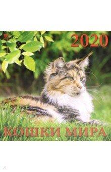 Zakazat.ru: Календарь 2020 Кошки мира (70004).