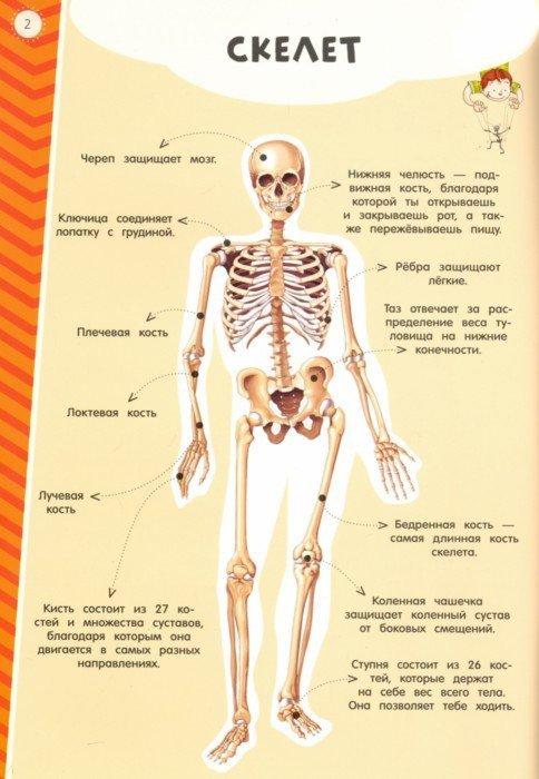 Иллюстрация 1 из 6 для Мой атлас с наклейками. Тело человека | Лабиринт - книги. Источник: Лабиринт