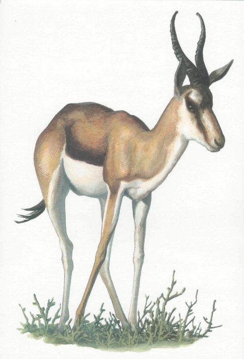 Иллюстрация 1 из 18 для Животные жарких стран | Лабиринт - книги. Источник: Лабиринт