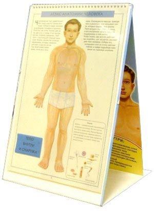 Иллюстрация 1 из 2 для Атлас анатомии человека с перекидными прозрачными постерами (большой) - Ганьон, Мерсеро | Лабиринт - книги. Источник: Лабиринт
