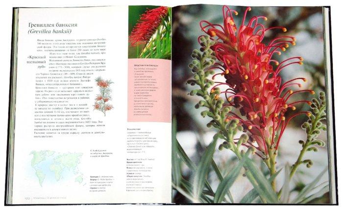Иллюстрация 1 из 4 для Экзотические растения - Миулан, Деска   Лабиринт - книги. Источник: Лабиринт