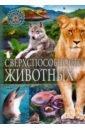 Фото - Сверхспособности животных сверхспособности животных