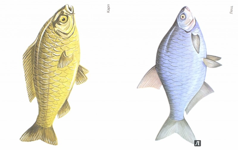 Иллюстрация 1 из 27 для Рыбы в картинках. Наглядное пособие для педагогов, логопедов, воспитателей и родителей | Лабиринт - книги. Источник: Лабиринт