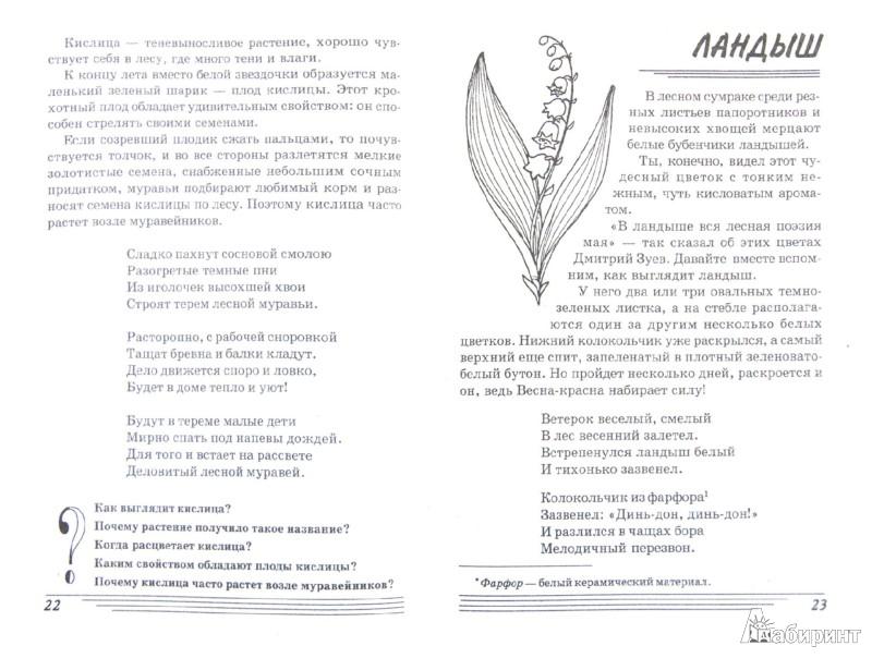 Иллюстрация 1 из 24 для Цветы. Какие они? Книга для воспитателей, гувернеров и родителей - Татьяна Шорыгина | Лабиринт - книги. Источник: Лабиринт
