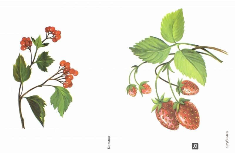 Разрезные картинки лесные ягоды для детей