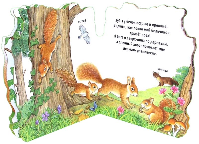Иллюстрация 1 из 2 для Домик для белочки. Домики для зверят   Лабиринт - книги. Источник: Лабиринт