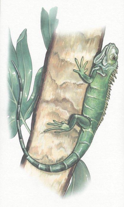 Иллюстрация 1 из 3 для Земноводные и пресмыкающиеся. Демонстрационный материал для фронтальных занятий | Лабиринт - книги. Источник: Лабиринт
