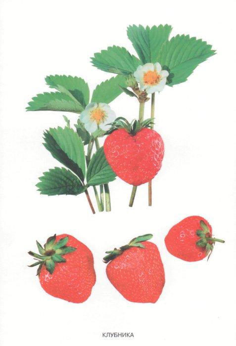Иллюстрация 1 из 5 для Мир в картинках: Ягоды садовые (3-7лет) | Лабиринт - книги. Источник: Лабиринт