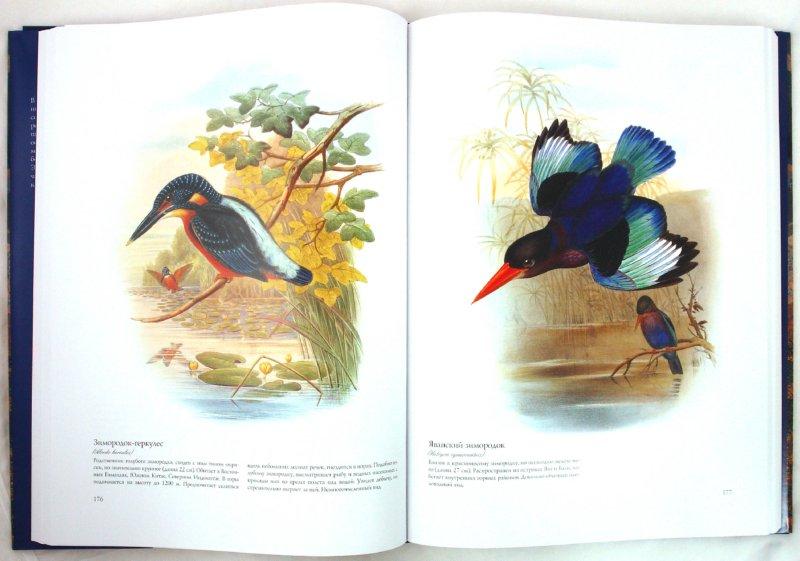 Иллюстрация 1 из 23 для Птицы Азии - Джон Гульд | Лабиринт - книги. Источник: Лабиринт