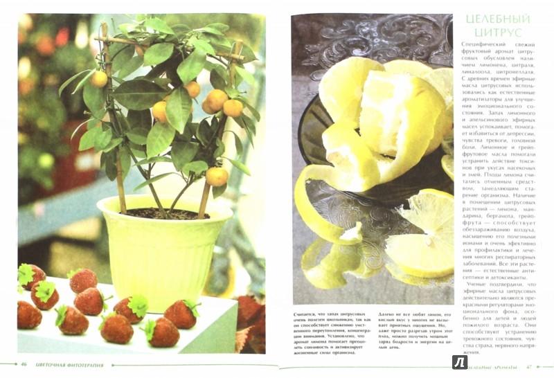 Иллюстрация 1 из 9 для Цветочная фитотерапия - Михаил Васильев | Лабиринт - книги. Источник: Лабиринт