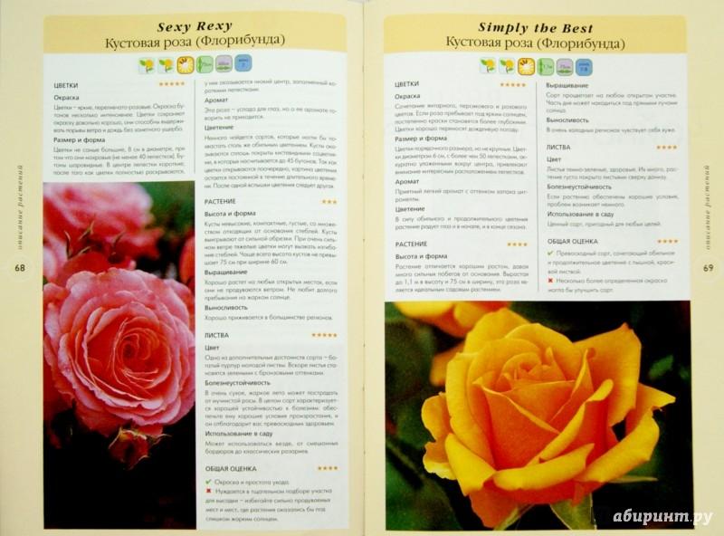 Иллюстрация 1 из 5 для Розы. Около 100 лучших видов и сортов - Филип Харкнесс | Лабиринт - книги. Источник: Лабиринт