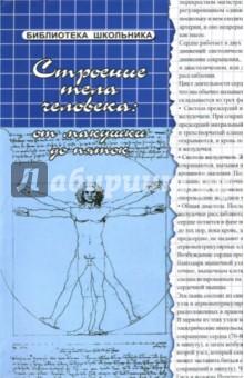 Строение тела человека: от макушки до пяток