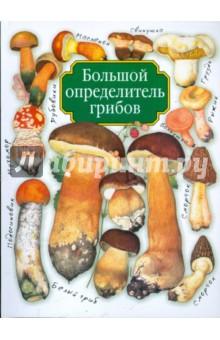 Большой определитель грибов - Александр Юдин