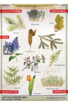 Окружающий мир. Многообразие растений. Природные зоны. Степь - Плешаков, Яременко