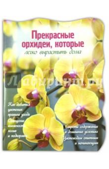 Прекрасные орхидеи, которые легко вырастить дома
