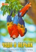 О. Куронова: Чудо в перьях. Удивительная жизнь птиц