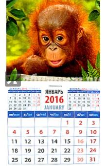 фото обезьяны на календарь